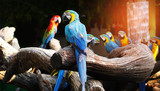 Colorful macaw bird on tree branch.