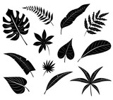 Silhouettes of tropical leaves.