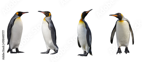 Aluminium Pinguin King penguins isolated on white background