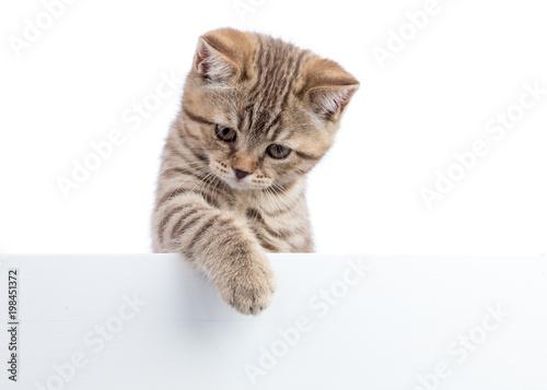 Kot figlarka wiesza nad pustym posterboard, odizolowywającym na bielu