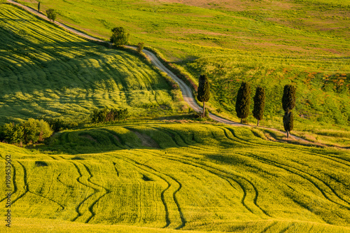 Tuinposter Honing Tuscany spring landscape