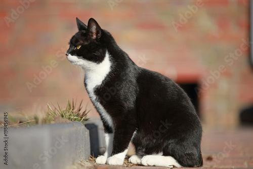 schwarz-weiße Katze auf einem Hof