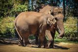 Close up of baby Elephant