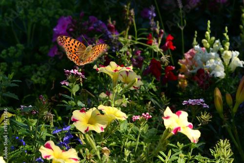 Foto op Plexiglas Zwart Schmetterling 457