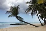 Tropical beach - 198473740