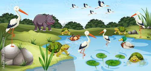 Wiele dzikich zwierząt w stawie