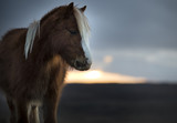 Sunset Pony 6