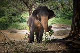 sri lanka. Elephants go to the watering hole