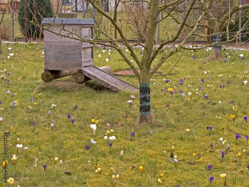 Ula wykonane z drewna zwane także ulem na łące z kwitnącym krokusiem