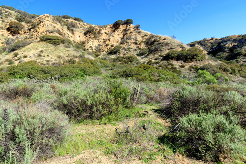 Fotobehang Beige Spring chaparral grows in Southern California mountains