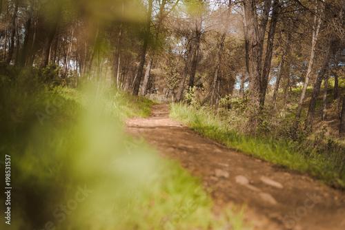 Fotobehang Weg in bos path