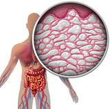 Interstitium Human Body Anatomy