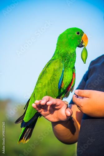 Plexiglas Papegaai Parrot, lovely bird, animal and pet at the natural park