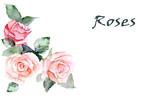 Watercolor roses illustration. Card template with roses.
