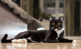 Лежащий черный кот