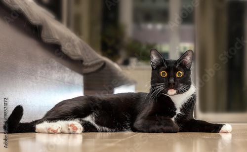 Лежащий черный кот - 198574172