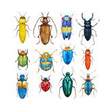 Watercolor beetles vector set