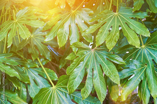 Foto Murales Green background with tropical leafs