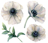 Watercolor white anemone set. Hand painted flowers with eucalyptus leaves isolated on white background. Natural illustration for design, print, fabric or background. - 198638799