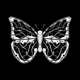 Butterfly. White drawing on black background