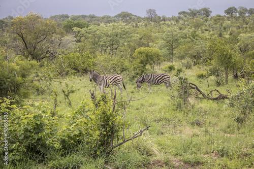 Fotobehang Pistache Animals in Africa