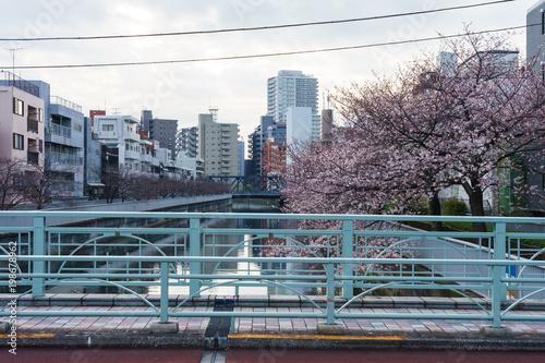 Fotobehang Lavendel 仙台堀川 桜