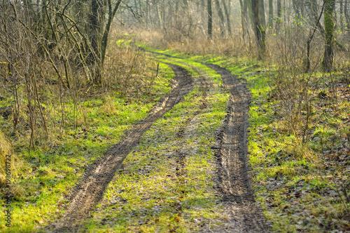 Fotobehang Weg in bos Wiejska droga