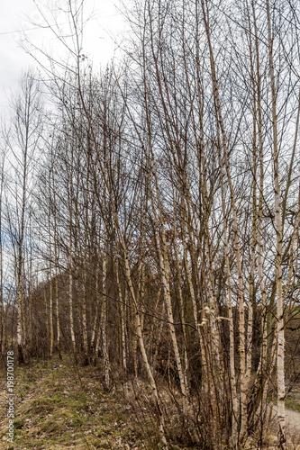 Birkenwald - 198700178