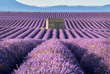 Lavender fields in Valensole with stone house in Summer light. Alpes de Haute Provence, France - 198726159