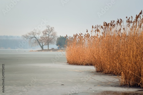 Winter morning landscape. Peninsula with trees on a frozen lake. - 198736113