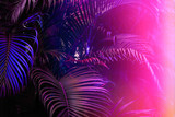 Deep dark purple palm leaves pattern with bright pink gradient effect, sun leak. Creative toned layout, horizontal - 198753584