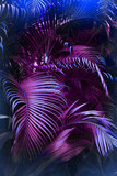 Vivid purple palm leaves pattern.  Blue gradient colored filter. Creative layout, toned, vertical - 198753593