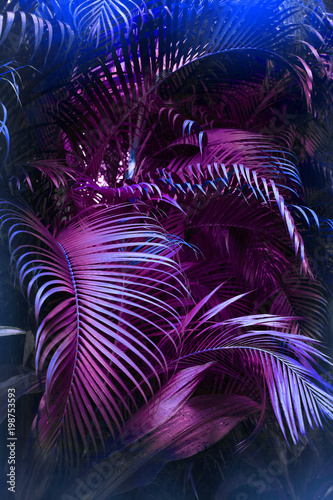 Vivid purple palm leaves pattern. Blue gradient colored filter. Creative layout, toned, vertical