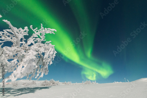 Fotobehang Noorderlicht Wonderful Northern lights (Aurora borealis)