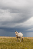 Horses - 198756578