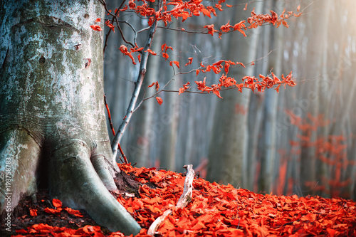 Autumn nature scene. Fantasy fall landscape. Beautiful autumnal park with bright red leaves and old trees