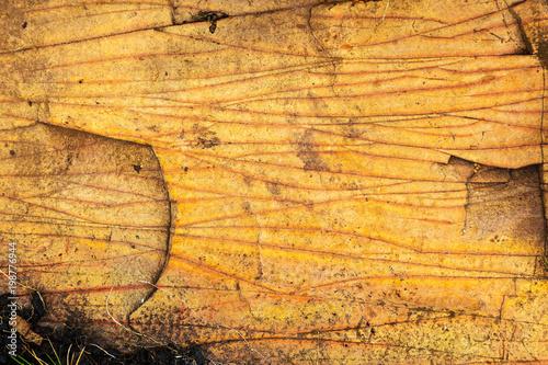 Fotobehang Stenen Textura amarela de rocha