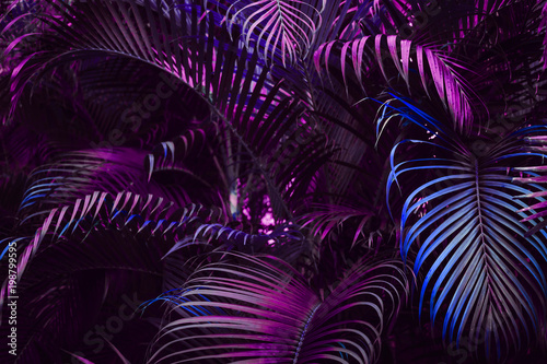 Vivid purple palm leaves pattern.  Blue gradient colored filter. Creative layout, toned, horizontal © Iuliia