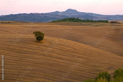 Fotobehang Toscane September twilight in the fields of Tuscany. Italy