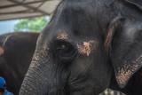 Thai Elephant Conservation Village.