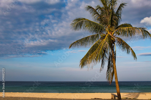 Keuken foto achterwand Tropical strand palm tree by the sea