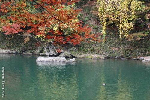 Fotobehang Khaki The leaves change color