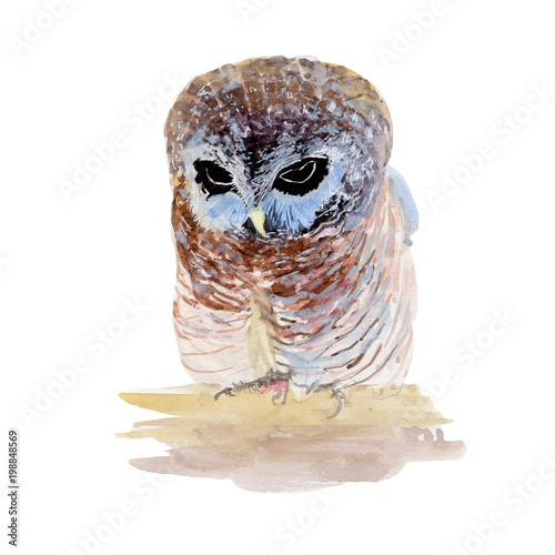 Fotobehang Uilen cartoon Owl Watercolor painting. Watercolor hand painted cute animal illustrations.