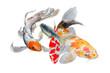 Koi Carp Watercolor painting. Watercolor hand painted cute animal illustrations.