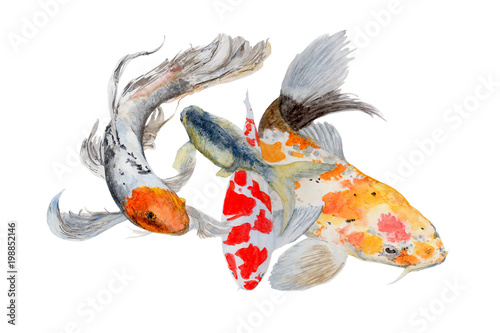 Koi Carp Watercolor painting. Watercolor hand painted cute animal illustrations. © stephinlo