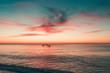 Delfini che nuotano al tramonto