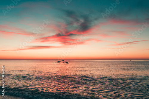 Keuken foto achterwand Ochtendgloren Delfini che nuotano al tramonto