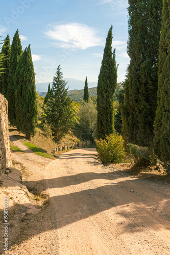 Fotobehang Toscane Country road with cypresses on the hills