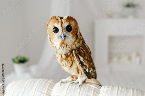 cute owlet sitting on a sofa