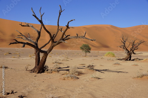 Scenic View Of Desert Against Clear Sky, Africa